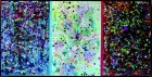 "Michele Araujo ""Untitled"" (Triptych) 2009"" 36 x 72 inches Ink, acrylic, collage on vellum"